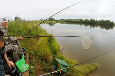 Pond fishing in summer