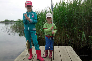 Organize a fishing trip for the kids