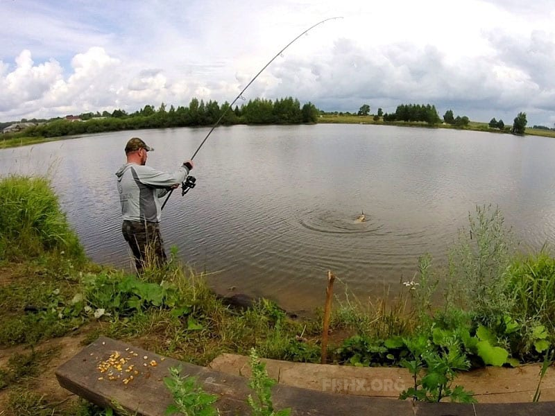 Carp fishing on the pond